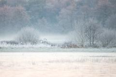 koud-landschap